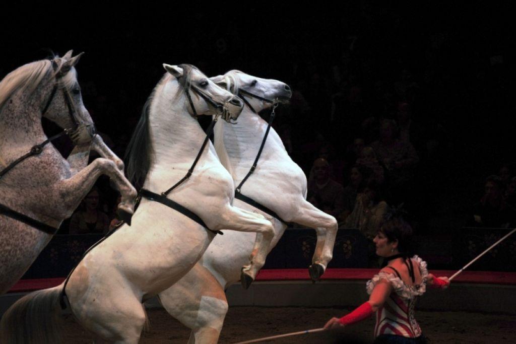 Društvo za zaščito živali poziva k bojkotu cirkuških predstav